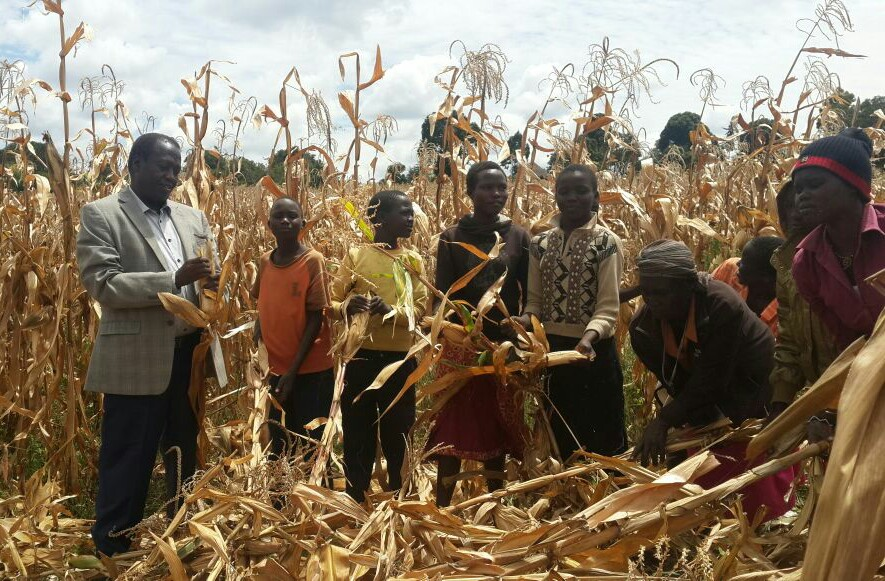 Sell your maize to NCPB, Cheboi advises Baringo farmers
