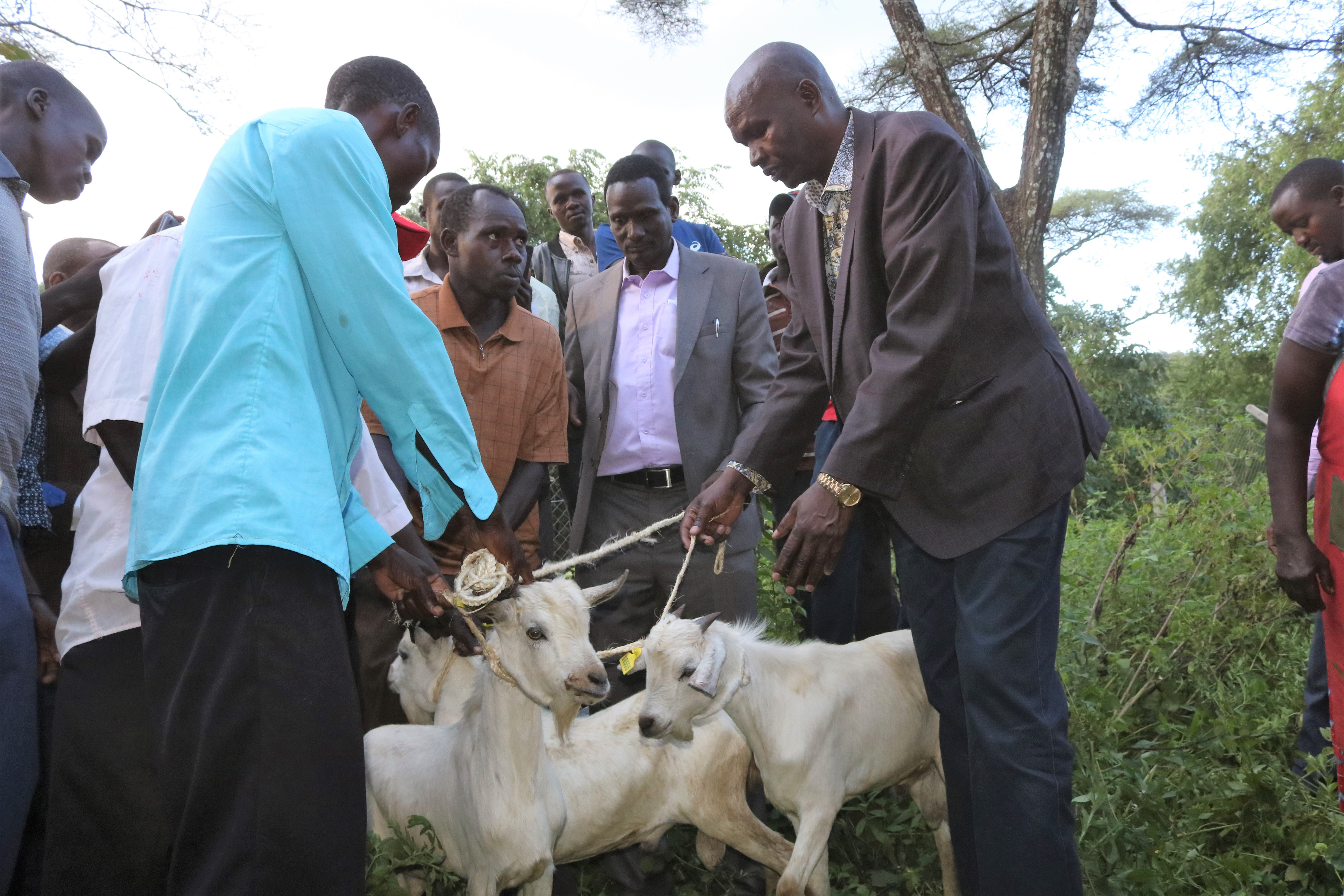 County government hands over 270 galla goats