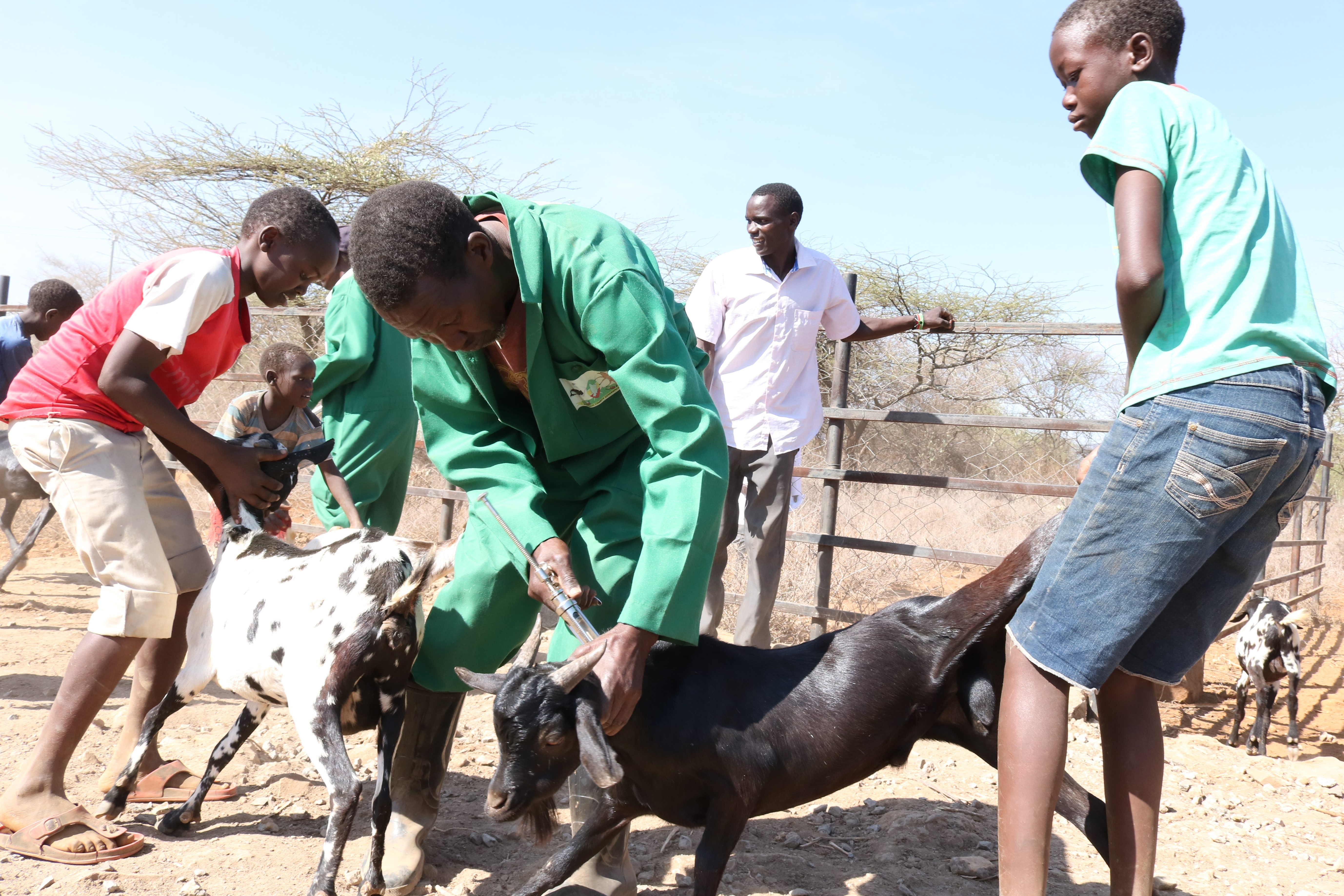 County government begins countywide vaccination against Foot and Mouth, PPR and Rabies