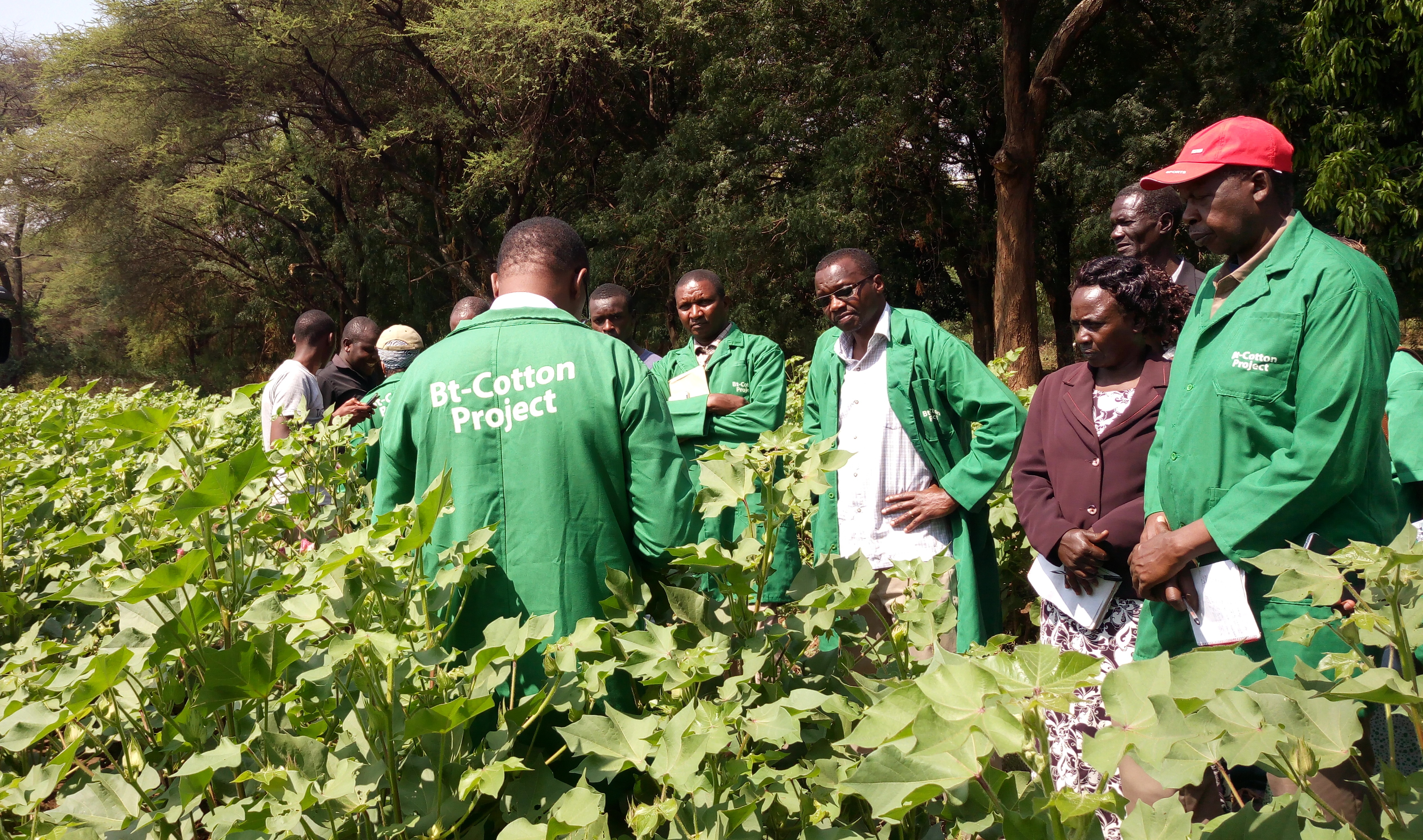 Baringo farmers to benefit from improved cotton viriety